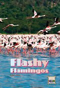 Flashy Flamingos